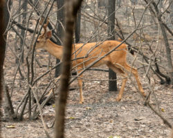 CDC issues cautioning to trackers after man likely shrink tuberculosis from deer