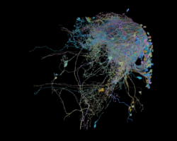Google publishes the biggest high-res map of brain connectivity